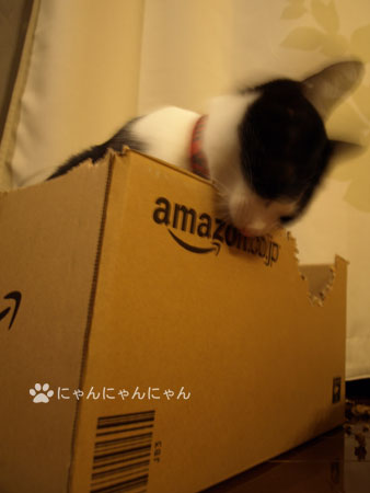 New_box3
