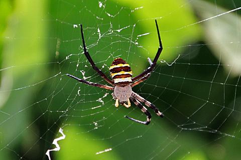 spider110724.jpg