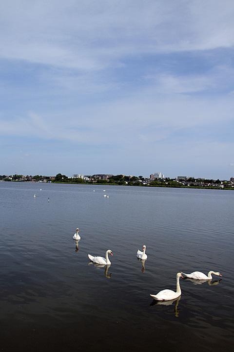 swan110724_2.jpg
