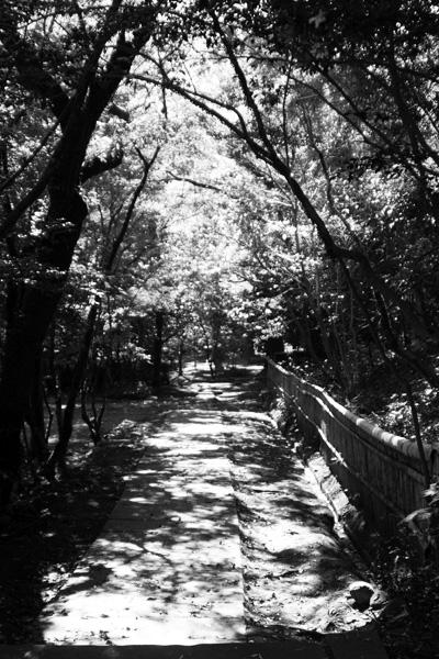 2009 11月3日 紅葉 021