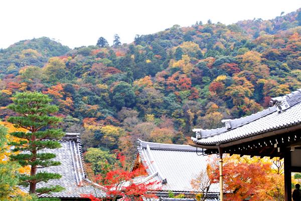 そうだ!京都へ行こう 2 077