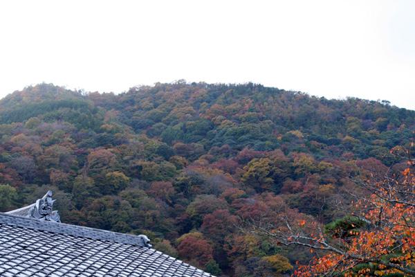 そうだ!京都へ行こう 2 053