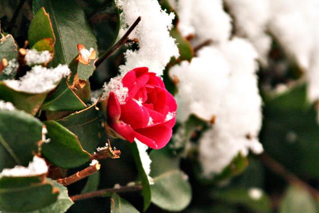 雪の朝 013