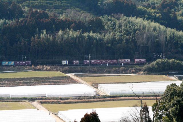 熊本城梅園 022