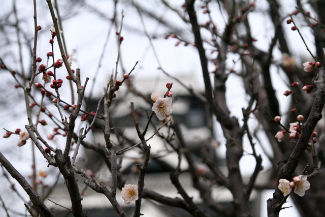 熊本城梅園 028