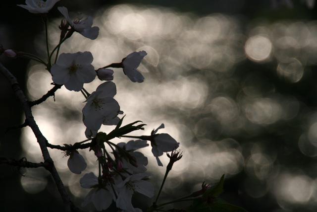 春 018