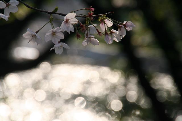 春 020