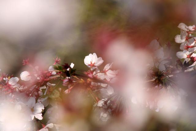 春 002