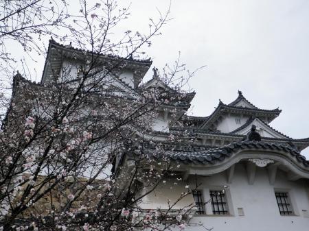 091111姫路城 (15)50