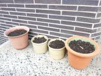 ひみつの植木鉢