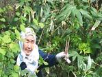 山菜採り5