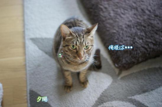 10_20111125095322.jpg