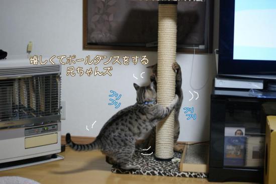 10_20111224185710.jpg