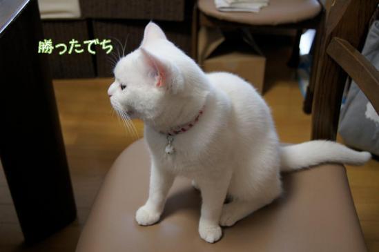 10_20111229093933.jpg