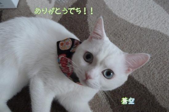 10_20120127074104.jpg