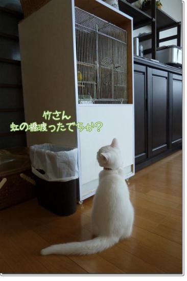 12_20111224185629.jpg