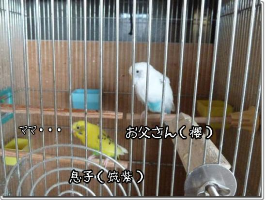 13_20111224185629.jpg