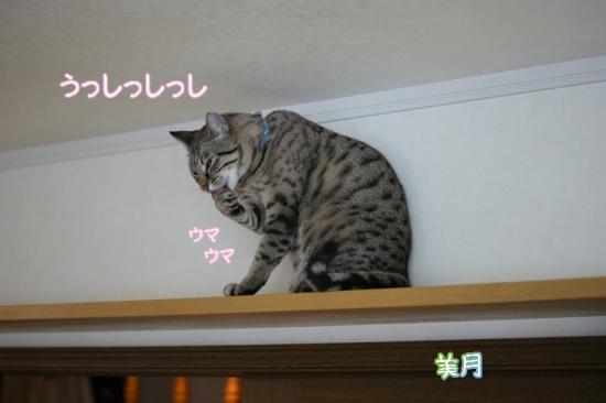 1_20111213101028.jpg