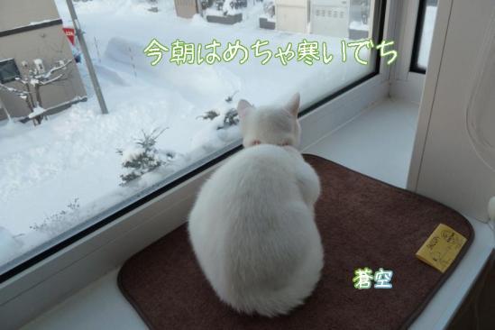 1_20111221091504.jpg