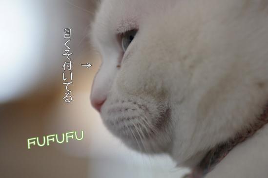 1_20120202204638.jpg