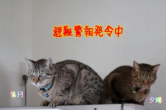 1_20120211191415.jpg