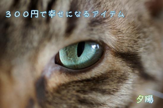 1_20120301080827.jpg