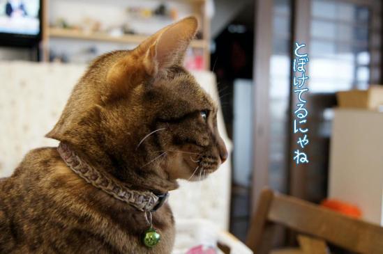 2_20111230085620.jpg