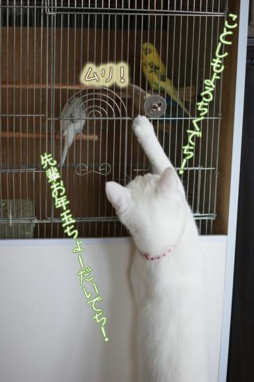 2_20120102085205.jpg