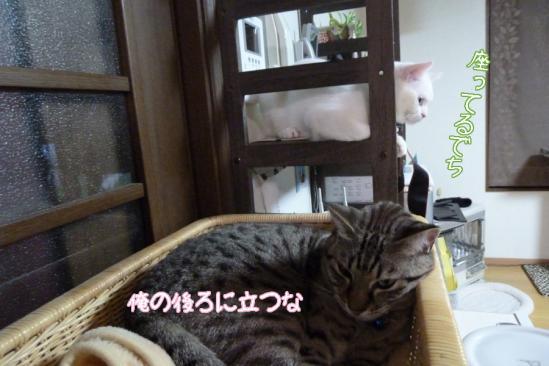 2_20120108071222.jpg