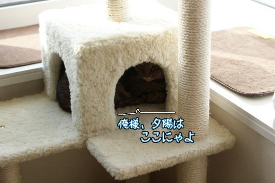 2_20120119224955.jpg