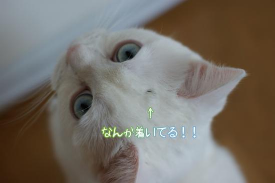 2_20120131110238.jpg
