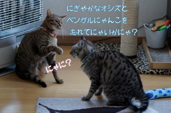 2_20120201210137.jpg