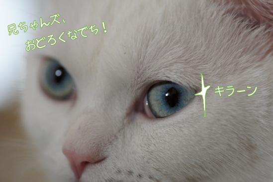 2_20120202204054.jpg