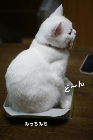 2_20120205080120.jpg