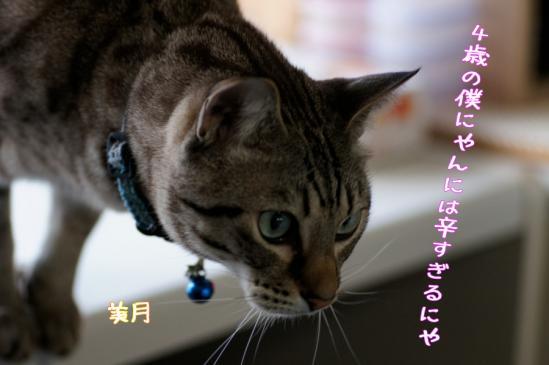 2_20120211191414.jpg