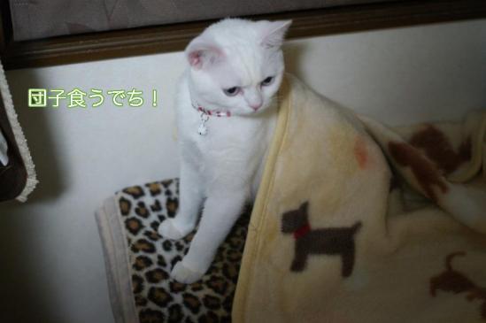 3_20111215084416.jpg