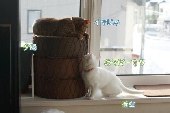 3_20111221091447.jpg