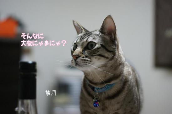 3_20111227130045.jpg