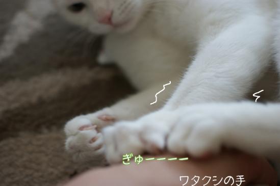 3_20120131110238.jpg