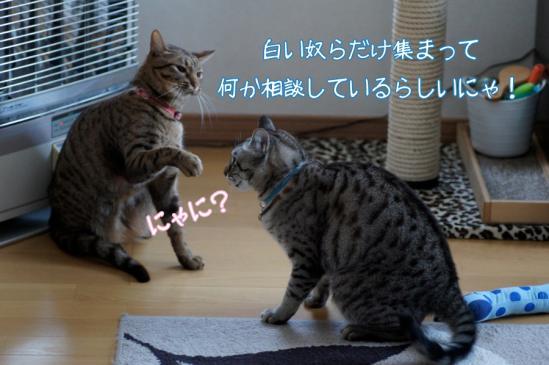 3_20120201084801.jpg