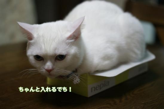 3_20120205080119.jpg
