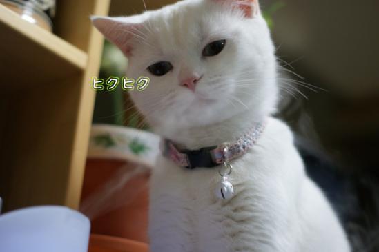 3_20120208102725.jpg