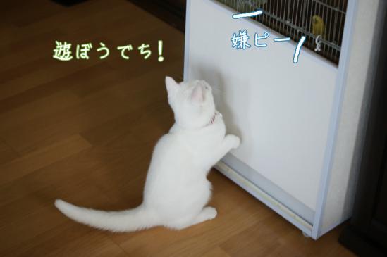 3_20120221011154.jpg