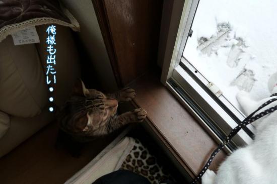 4_20111123091545.jpg