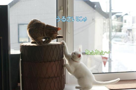 4_20111221091446.jpg