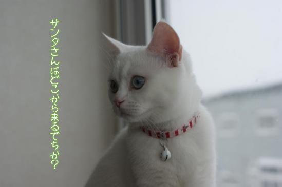 4_20111223080459.jpg