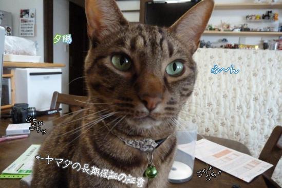 4_20111227130045.jpg