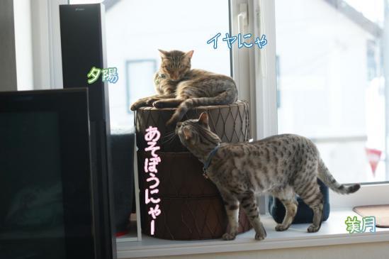 4_20120103130318.jpg