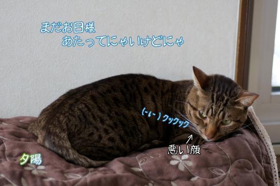 4_20120115214436.jpg