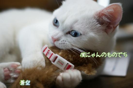 4_20120119095042.jpg